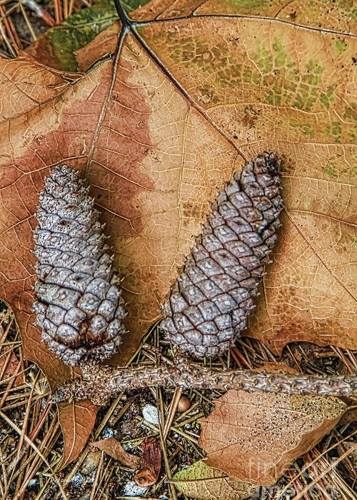 Leaves Greeting Card featuring the photograph Pine Cones And Leaves by Deborah Benoit