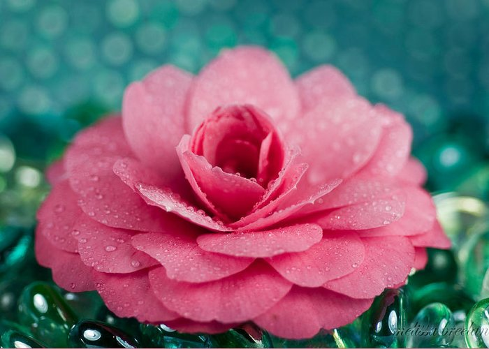 Pink Greeting Card featuring the photograph Pink Camellia by Melissa Wyatt