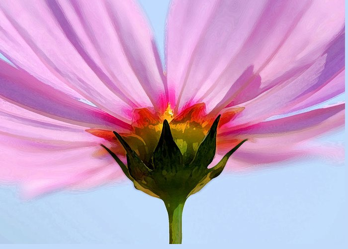 Flowers Greeting Card featuring the photograph Pink Cosmos by Rich Franco