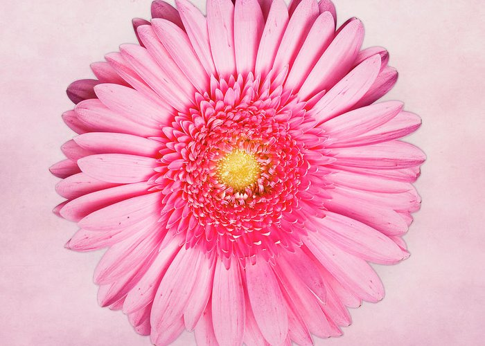 Pink Greeting Card featuring the photograph Pink Delight by Tamyra Ayles