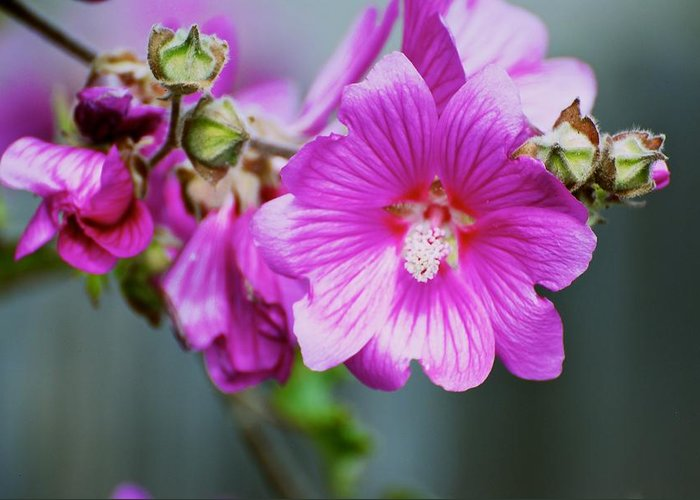 Flower Greeting Card featuring the photograph Pink Something-or-rather by Eric Tressler