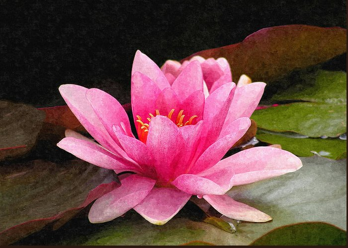 Pink Greeting Card featuring the photograph Pink Water Lily by Design Windmill
