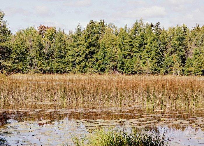 Ponds Greeting Card featuring the photograph Pintail Pond3 by Jennifer King