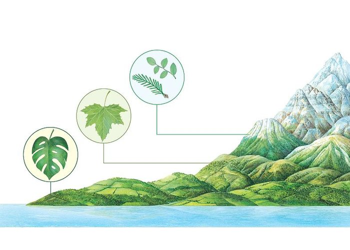 Monstera Sp. Greeting Card featuring the photograph Plant Communities, Artwork by Gary Hincks