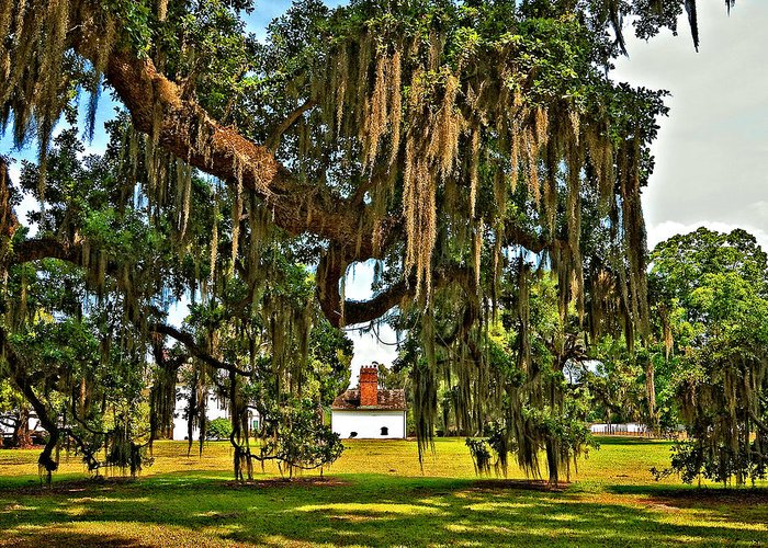 Evergreen Plantation Greeting Card featuring the photograph Plantation by Steve Harrington