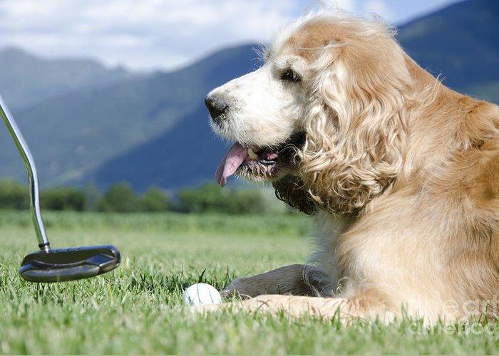 Golf Pants Greeting Cards