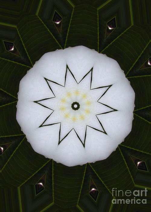 Digital Design Greeting Card featuring the photograph Plumeria by Mark Gilman