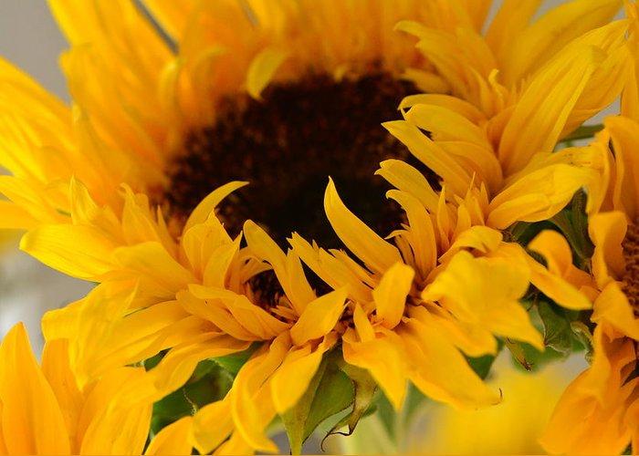 Pocket full of sunshine greeting card for sale by tanya tanski sunflower greeting card featuring the photograph pocket full of sunshine by tanya m4hsunfo