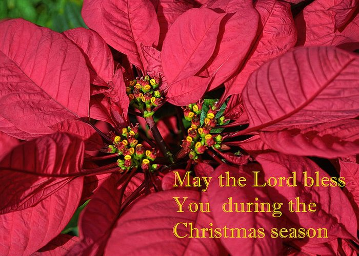 Floral Greeting Card featuring the photograph Poinsetta For Christmas by Linda Phelps