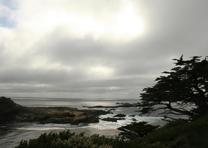 Point Lobos Reserve Greeting Card featuring the photograph Point Lobos View by Suzanne Lorenz