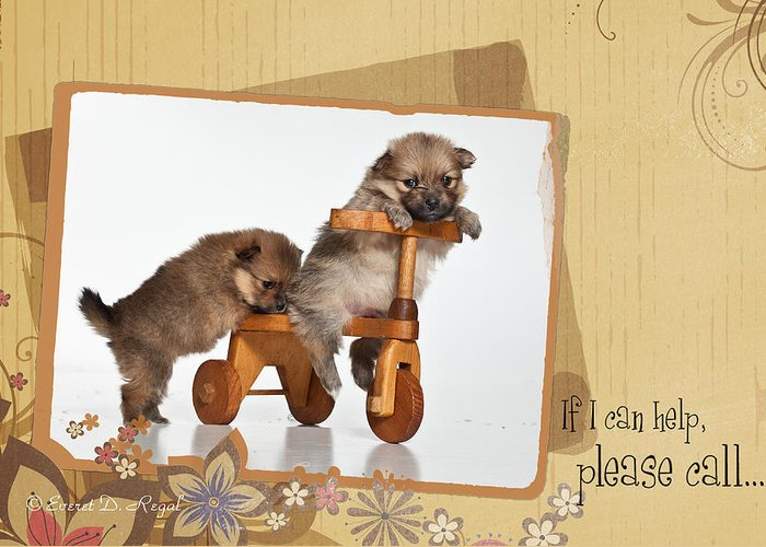 Puppies Greeting Card featuring the photograph Pomeranian 1 by Everet Regal