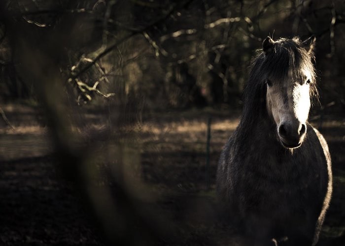 Pony Greeting Card featuring the photograph Pony In The Brambles by Justin Albrecht