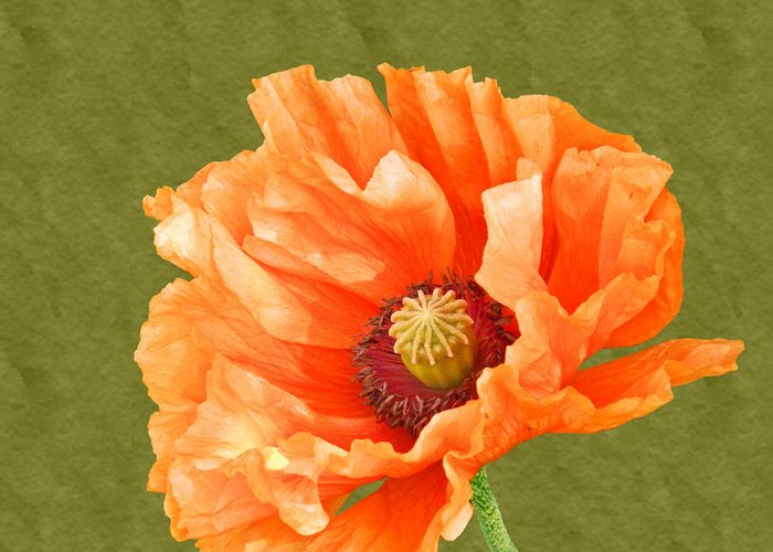 Poppies Greeting Card featuring the photograph Poppy by Sharon Lisa Clarke