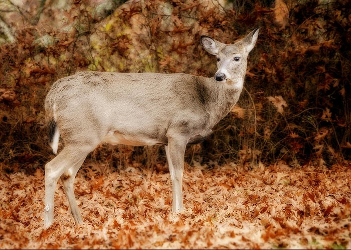 Deer Greeting Card featuring the photograph Portrait Of A Deer by Kathy Jennings