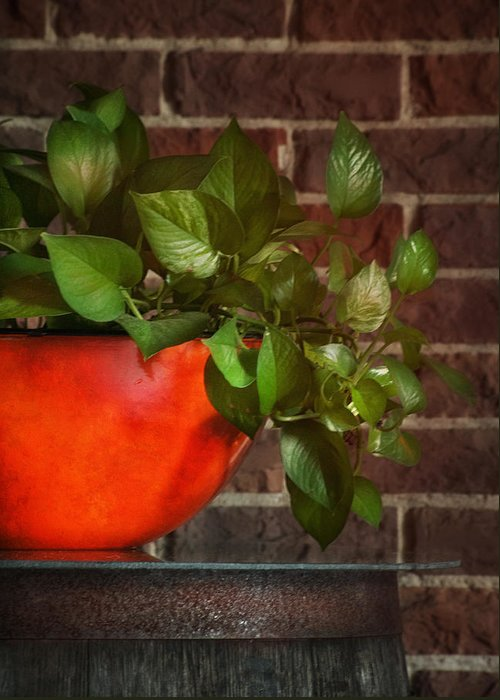 Ivy Greeting Card featuring the photograph Pot Of Greens by Brenda Bryant
