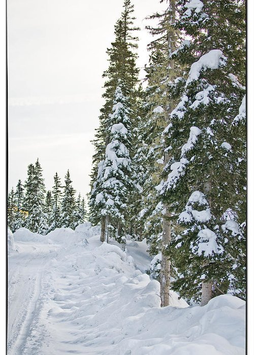 Mountain Greeting Card featuring the photograph Powdery Snow Path by Lisa Spencer