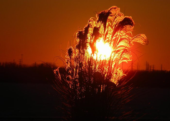Sunset Greeting Card featuring the photograph Prairie Grass Ablaze by Helen ONeal