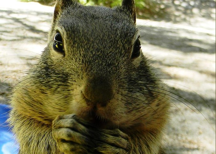 Squirrel Greeting Card featuring the photograph Praying Nuts by DJ Laughlin
