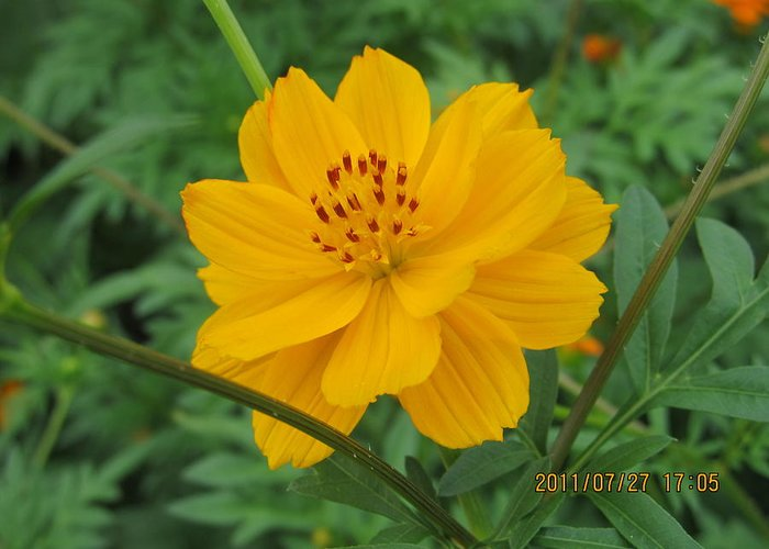 Flowers Greeting Card featuring the photograph Pretty And Lovely In Yellow by Tina M Wenger