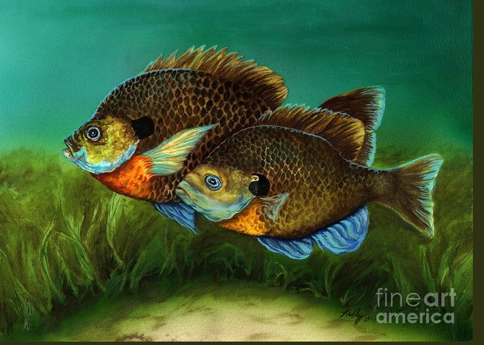 Bluegills Greeting Card featuring the painting Pretty Little Panfish by Kathleen Kelly Thompson