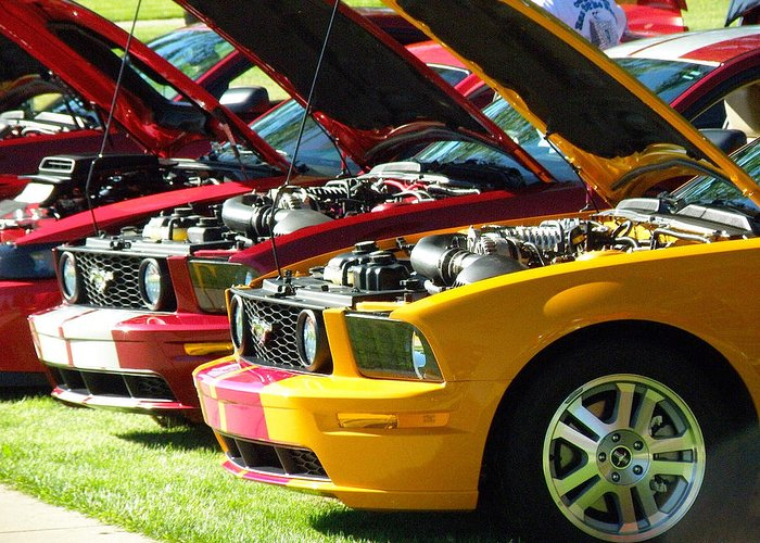 Ford Greeting Card featuring the photograph Pretty Mustangs In A Row by FeVa Fotos