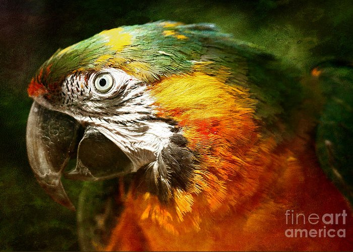 Parrot Greeting Card featuring the photograph Pretty Polly by Lee-Anne Rafferty-Evans
