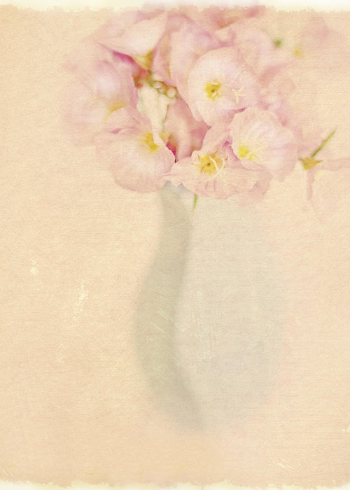 Primroses Greeting Card featuring the photograph Pretty Primroses by Linde Townsend
