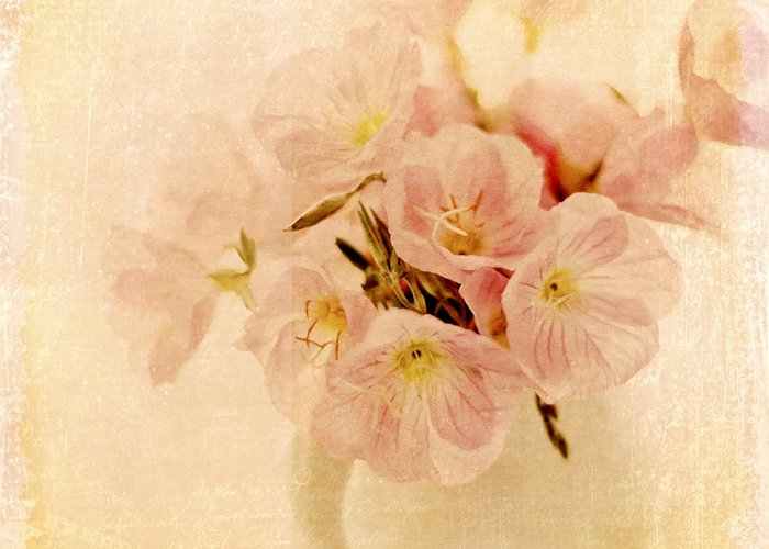 Primroses Greeting Card featuring the photograph Primrose Delights by Linde Townsend