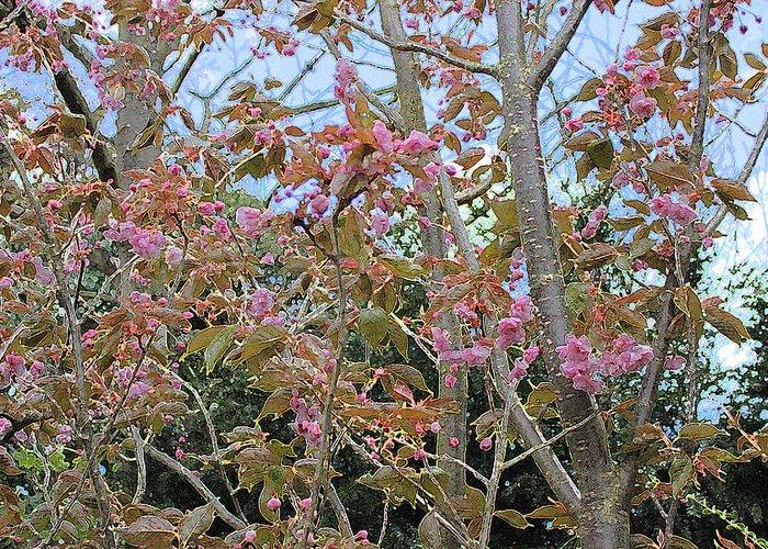 Flowering Cherry Greeting Card featuring the digital art Prunus Kanzan 1 by Surbjit Singh