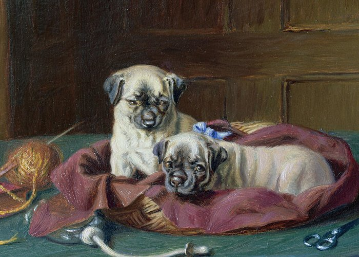 Pug Puppies In A Basket Greeting Card featuring the painting Pug Puppies In A Basket by Horatio Henry Couldery