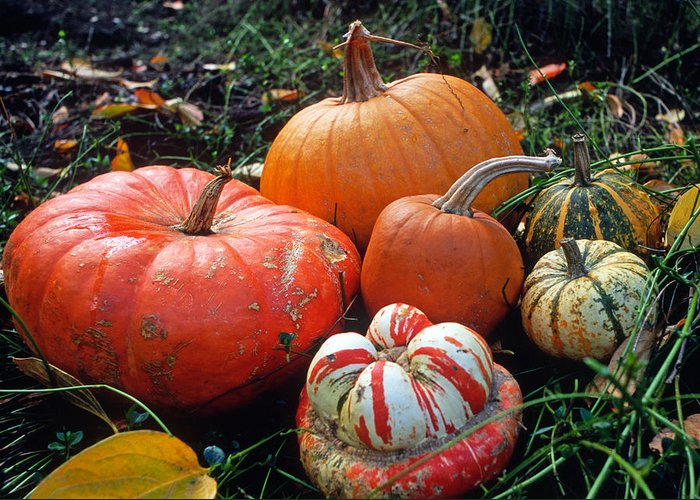 Pumpkins Greeting Card featuring the photograph Pumpkin Patch by Kathy Yates