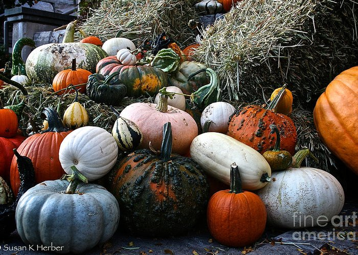 Outdoors Greeting Card featuring the photograph Pumpkin Piles by Susan Herber