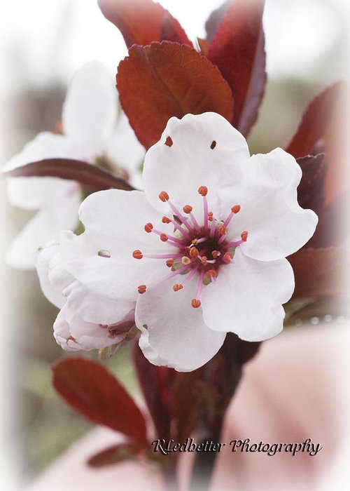 White Greeting Card featuring the photograph Pure Beauty by Renee Ledbetter