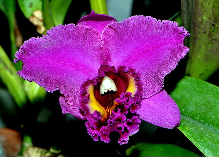 Floral Greeting Card featuring the photograph Purple Orchid 006 by George Bostian