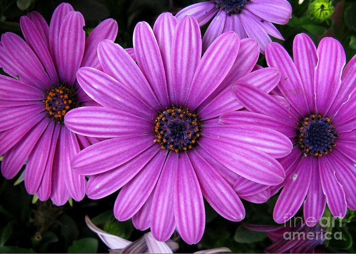 Flower Greeting Card featuring the photograph Purple Trio by Ashley M Conger
