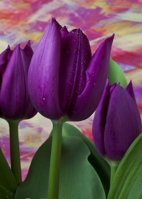 Purple Tulip Greeting Card featuring the photograph Purple Tulips by Garry Gay