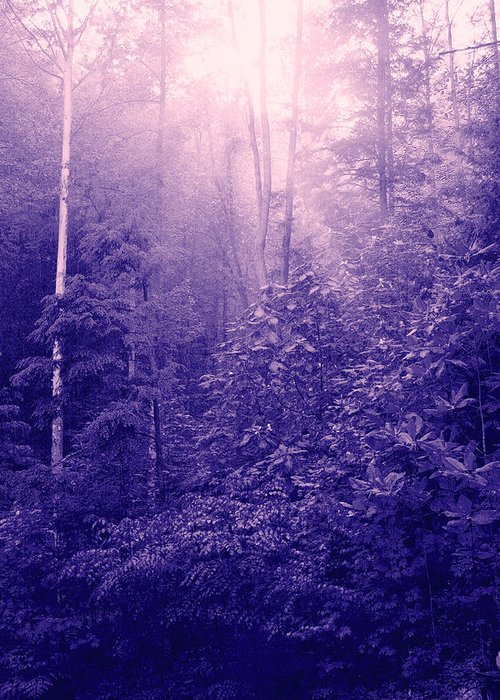 Pm Greeting Card featuring the photograph Purple Woods by Nina Fosdick