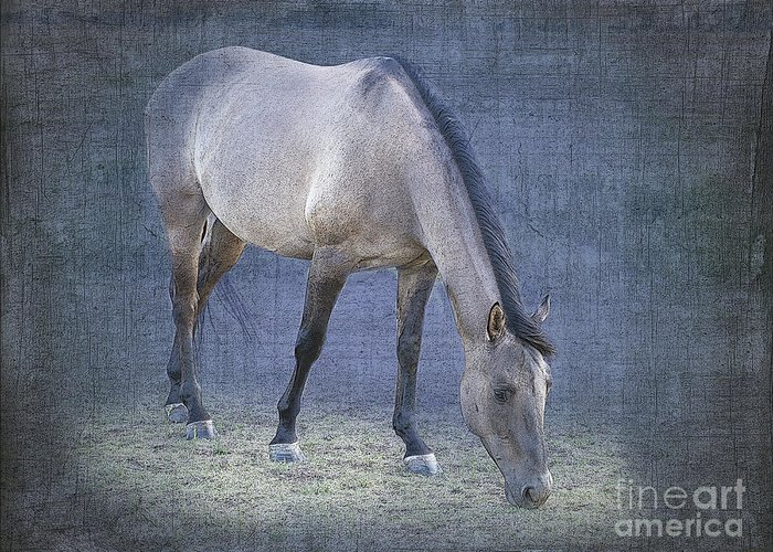 Horse Greeting Card featuring the photograph Quarter Horse In Blue by Betty LaRue