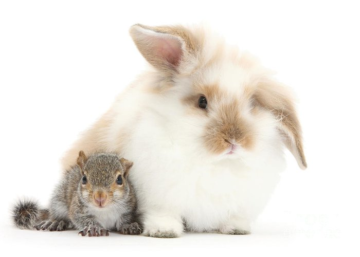 Nature Greeting Card featuring the photograph Rabbit And Squirrel by Mark Taylor