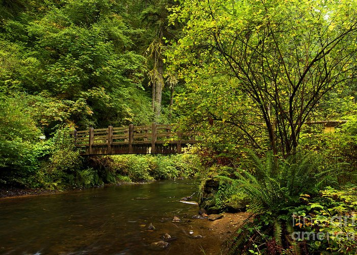 Silver Falls State Park Greeting Card featuring the photograph Rain Forest Bridge by Adam Jewell