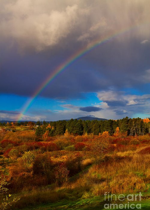 Rithets Bog Greeting Card featuring the photograph Rainbow Over Rithets Bog by Louise Heusinkveld