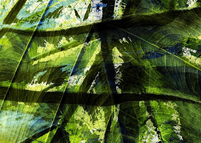 Abstract Greeting Card featuring the photograph Rainforest Abstract by Bonnie Bruno