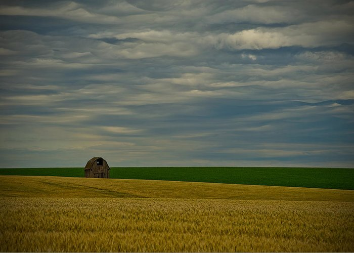 Wheat Greeting Card featuring the photograph Rainy Day Blues by Dan Mihai