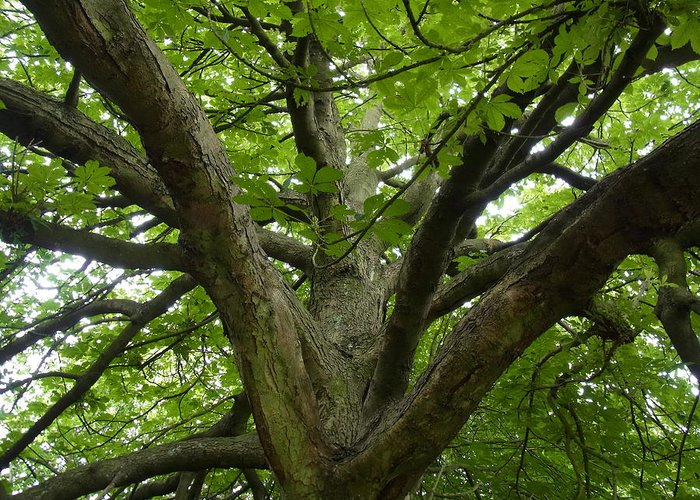 Tree Greeting Card featuring the photograph Reaching For The Sky by Geoff Leckey