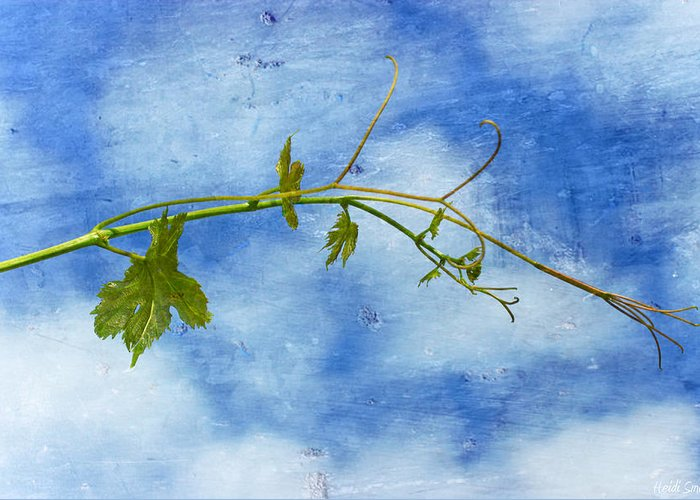 Agriculture Greeting Card featuring the photograph Reaching Out by Heidi Smith