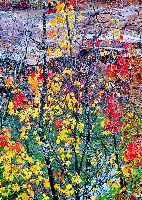 Trees Greeting Card featuring the photograph Red And Gold In Quarry At Elephant Rocks State Park by Greg Matchick