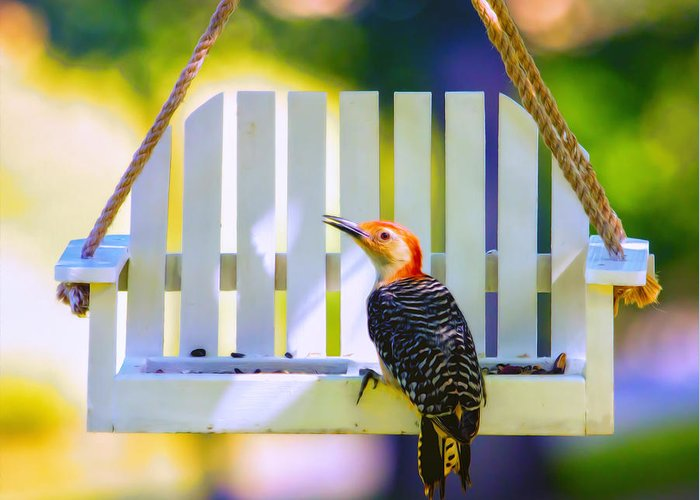 Red-bellied Woodpecker Greeting Card featuring the photograph Red-belly Comes For Lunch by Bill Tiepelman