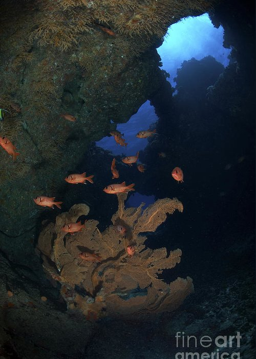 Fish Greeting Card featuring the photograph Red Bigeye Fish And Sea Fan In An by Mathieu Meur