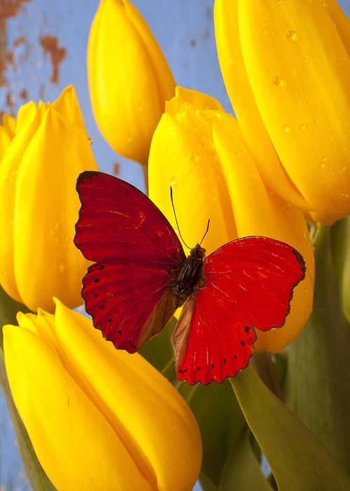 Red Greeting Card featuring the photograph Red Butterful On Yellow Tulips by Garry Gay