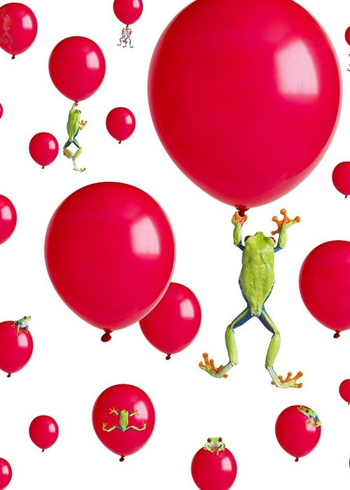 Amphibian Greeting Card featuring the photograph Red-eyed Treefrogs Floating On Red by Corey Hochachka